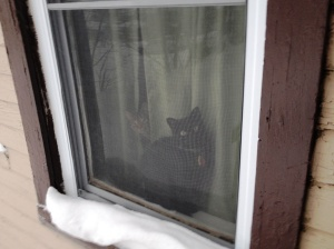 2 cats in winter window