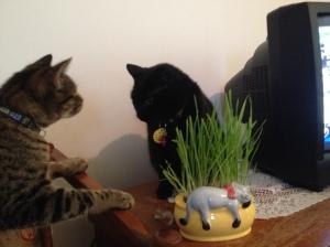 Milo Jinx grass meeting