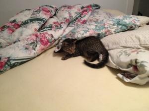Milo on bed 001