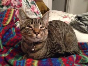 Milo, just chillin'