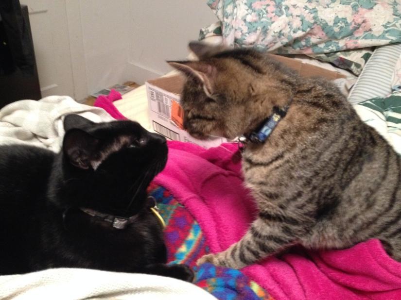 Cats Just Wanna HaveFun!