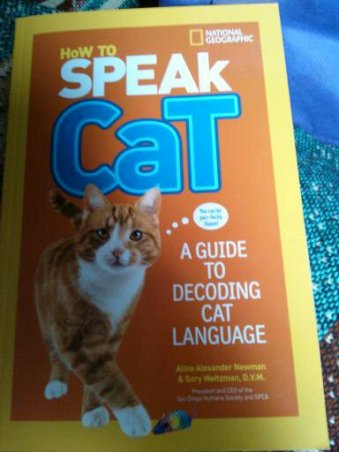 Hot to Speak Cat