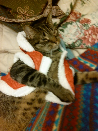 Milo Claus lounging