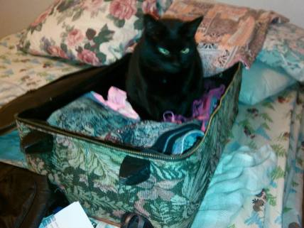 jinx in suitcase