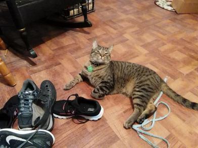 Milo shoe pile