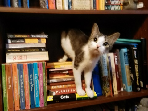 zoey bookcase